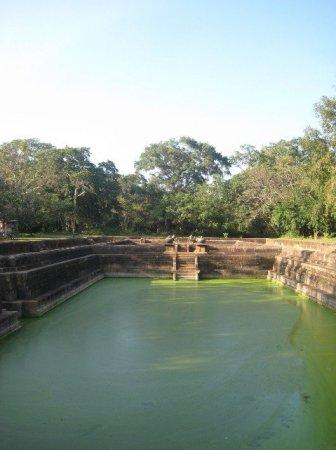 История появления бассейна